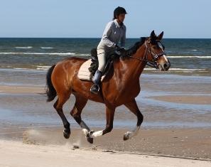 Horseback riding holidays