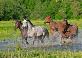 Horseback riding holidays in Baltic States