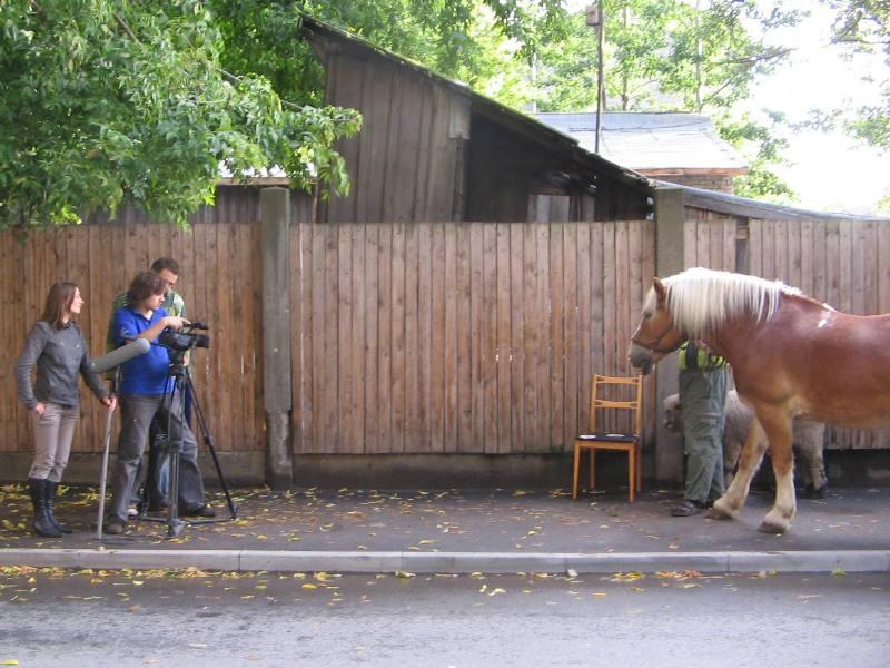 Izjāde ar zirgiem