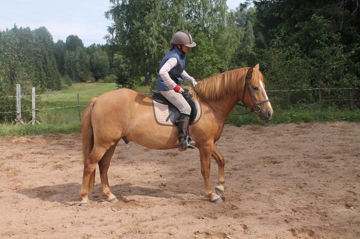 Equestrian holiday