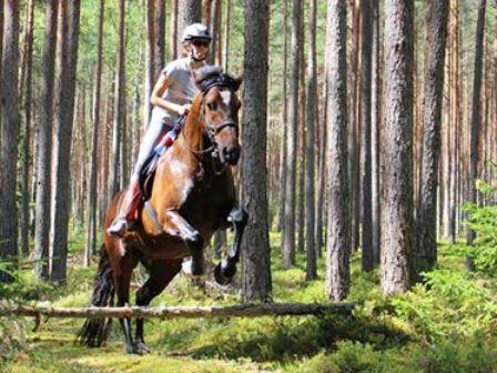 Equestrian holidays
