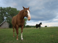 "Explore and book this <a href=""http://www.adventureride.eu/en/select-route"">horseback riding vacation</a>"