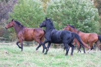 """Book and ride on these beautiful horses in your best <a href=""""http://www.adventureride.eu/en/select-route"""">horseback riding vacation</a>"""