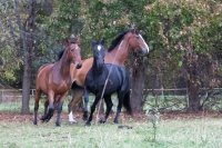 """Be the part of Adventure and ride these horses in your <a href=""""http://www.adventureride.eu/en/select-route"""">horseback riding vacation</a>"""