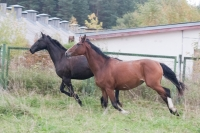 """Take a part of Adventure and ride these horses in your  <a href=""""http://www.adventureride.eu/en/select-route"""">horseback riding vacation</a>"""