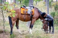 "Explore and book your <a href=""http://www.adventureride.eu/en/select-route"">horseback riding vacation</a>"