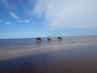 "Riding on the beach near Kolka cape on <a href=""http://www.adventureride.eu/en/select-dates/empty_beaches_of_slitere_national_park/"">horseback riding vacation</a> in Slitere national park"