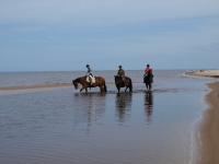 "<a href=""http://www.adventureride.eu/en/select-dates/through_forests_and_beaches_of_adazi/"">Horseback riding vacation</a> in the empty beaches of Baltic sea"