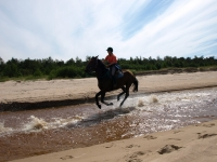 "Gallop on a horseback on <a href=""http://www.adventureride.eu/en/select-dates/empty_beaches_of_slitere_national_park/"">horseback riding vacation</a> in Slitere national park"