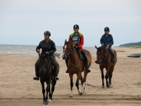 "Explore and book this <a href=""http://www.adventureride.eu/en/select-dates/empty_beaches_of_slitere_national_park/"">horseback riding vacation</a>"