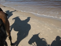 "Sunny <a href=""http://www.adventureride.eu/en/select-dates/empty_beaches_of_slitere_national_park/"">horseback riding vacations</a> on the beach"