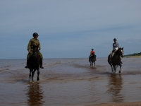 "We love <a href=""http://www.adventureride.eu/en/select-dates/through_forests_and_beaches_of_adazi/"">horseback riding vacations</a> on the beach. You can choose any direction you like and ride for hours!"