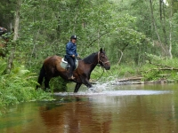 "Adventurous play in the wildness on <a href=""http://www.adventureride.eu/en/select-dates/through_the_rivers_of_gauja_national_park/"">horseback riding vacation</a> in Gauja national park"