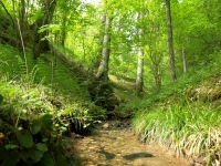 "Green and fresh forest spring in <a href=""http://www.adventureride.eu/en/select-dates/through_the_rivers_of_gauja_national_park/"">horseback riding vacation</a> in Gauja national park"
