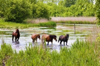 "Summer in its full! Green meadows, river and horses on <a href=""http://www.adventureride.eu/en/select-dates/through_the_rivers_of_gauja_national_park/"">horseback riding vacation</a> in Gauja national park"