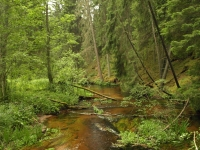 "Wilderness in the forests of Latvia on <a href=""http://www.adventureride.eu/en/select-dates/through_the_rivers_of_gauja_national_park/"">horseback riding vacation</a> in Gauja national park"