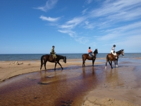 "Sunny day with horses on the beach on <a href=""http://www.adventureride.eu/en/select-dates/empty_beaches_of_slitere_national_park/"">horseback riding vacation</a in Slitere national park"