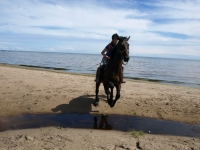 "Jumping over the smallest of the rivers in <a href=""http://www.adventureride.eu/en/select-dates/empty_beaches_of_slitere_national_park/"">horseback riding vacation</a> in Slitere National park"