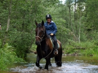 "Green forests and wild rivers are a great place to enjoy the closeness to the nature on <a href=""http://www.adventureride.eu/en/select-dates/through_the_rivers_of_gauja_national_park/"">horseback riding vacation</a> in Gauja national park"