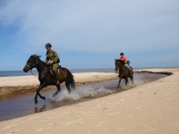 "Freedom in the river! This is <a href=""http://www.adventureride.eu/en/select-dates/empty_beaches_of_slitere_national_park/"">horseback riding vacation</a> in Slitere National park"