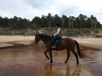 "Enjoying dry feet on horseback on <a href=""http://www.adventureride.eu/en/select-dates/through_forests_and_beaches_of_adazi/"">horseback riding vacation</a> in Lilaste nature park"