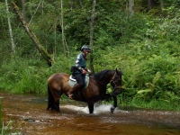 "Wilderness of the nature in Latvia on <a href=""http://www.adventureride.eu/en/select-dates/through_the_rivers_of_gauja_national_park/"">horseback riding vacation</a> in Gauja national park"