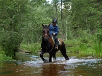 "Take a part of Adventure and book this <a href=""http://www.adventureride.eu/en/select-dates/through_the_rivers_of_gauja_national_park/"">horseback riding vacation</a> in Gauja national park"