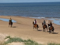 """Explore and book this <a href=""""http://www.adventureride.eu/en/select-dates/through_forests_and_beaches_of_adazi/"""">horseback riding vacation</a> in Lilaste nature park"""