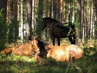 "Explore and book this <a href=""http://www.adventureride.eu/en/select-dates/through_forests_and_beaches_of_adazi/"">horseback riding vacation</a> in Lilaste nature park"