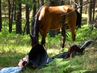 "Explore and book this <a href=""http://www.adventureride.eu/en/select-dates/empty_beaches_of_slitere_national_park/"">horseback riding vacation</a> in Slitere national park"