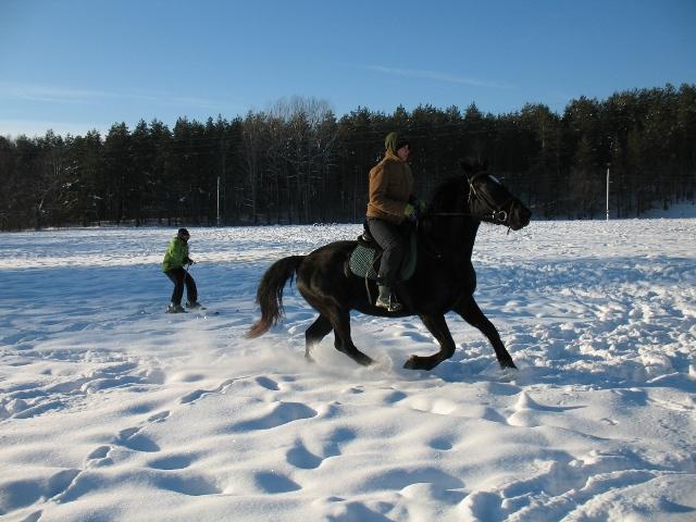 Skijorings ar zirgu